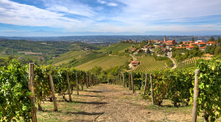 Rows of vineyards on the hills and small town on background under beautiful sky in Piedmont, Northern Italy.