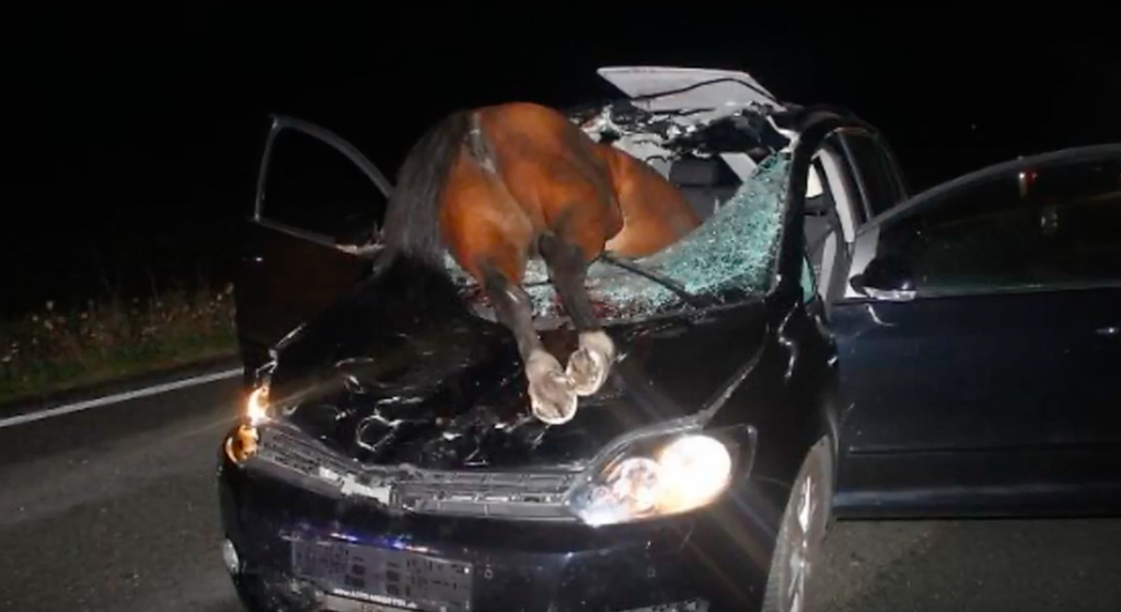 cavallo incidente