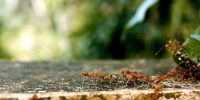 formiche, Foto di AnishRoy, https://pixabay.com/it/photos/formiche-ant-gruppi-squadra-2809019/ CC0