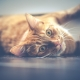Gatto https://pixabay.com/it/photos/cat-animale-domestico-soriano-viso-1044914/via Pixabay Copyright DariuszSankowski, CC0